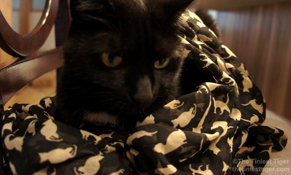 Mercy models the black cat print scarf
