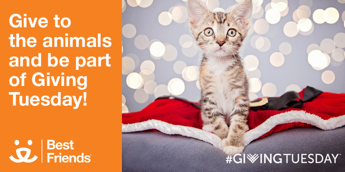 Best Friends Animal Society  #GivingTuesday Help Save Them All