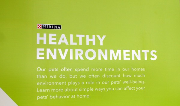 Healthy Environments for Cats