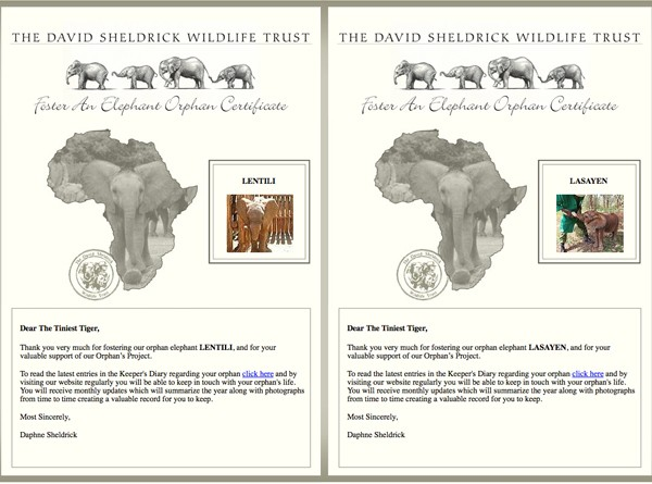 2015 DSWT Fostering Certificates