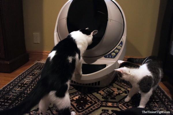 Eddie Annie look into litter robot