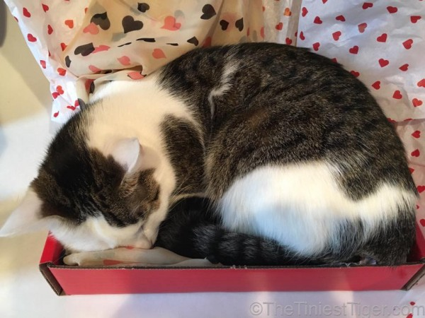 Annie sleeping in Valentine gift box