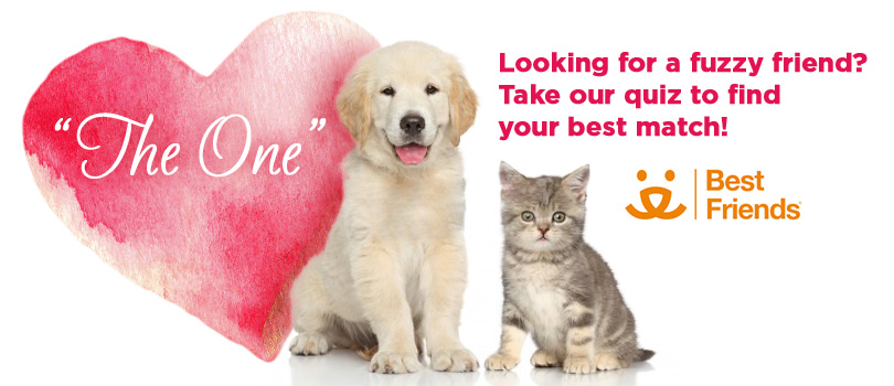 12 Reasons To Ditch Dating and Adopt a Pet! #RelationshipGoals