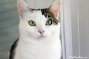 Cat in sunroom