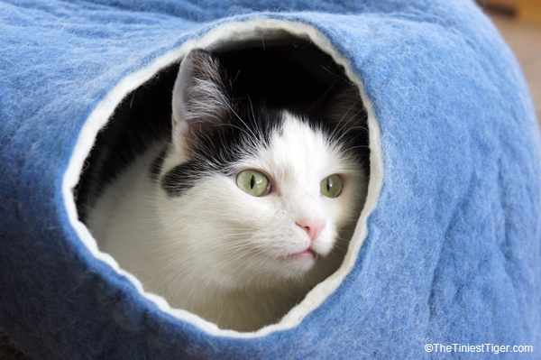 Cats Love the Kivkikis Cat Cave