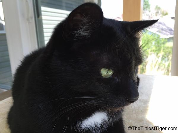 Our Cat Mercy's Broken Heart