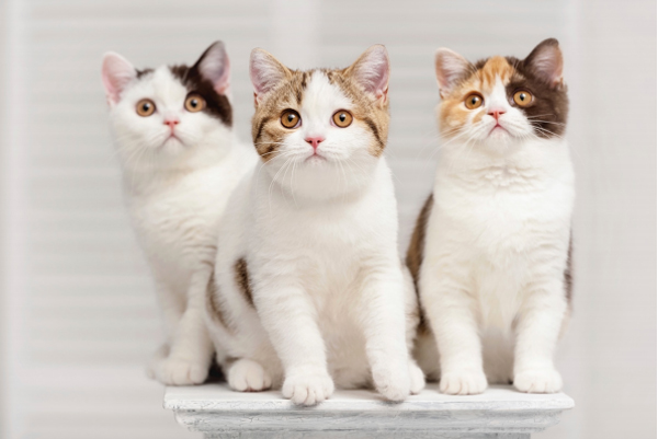 The IDEXX SDMA Test Will Help 1 in 3 Cats. Is Your Cat The 1? #AskYourVet
