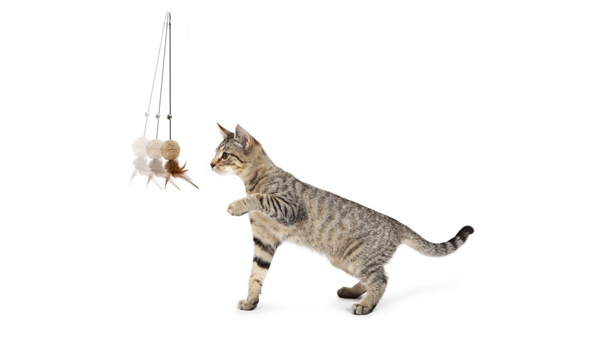 Whimsy Automatic Cat Toy from PetSafe Giveaway