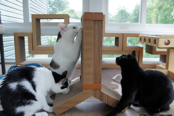 KATRIS Announces New Lynks Cat Scratcher Pair
