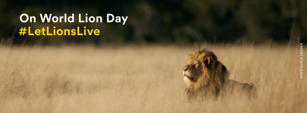 World Lion Day header