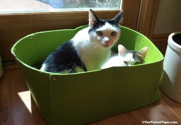 Eddie and Annie in the green felt bed