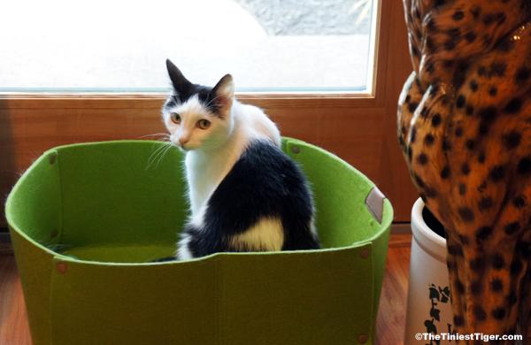 Annie is a Sad Cat.  Her Chipmunk Friend is Missing.