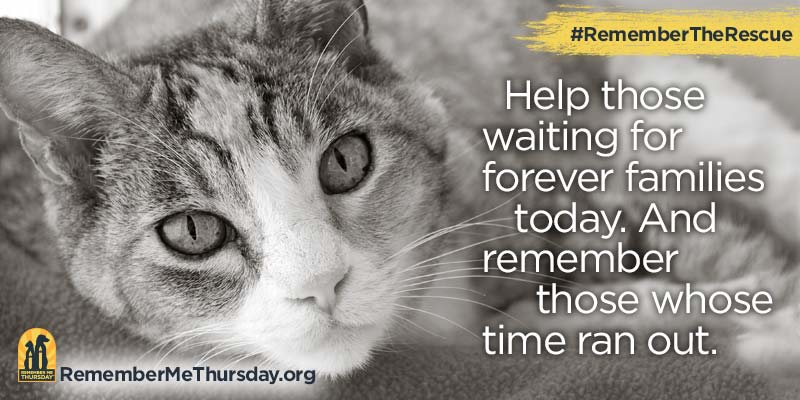 Remember Me Thursday #RememberTheRescue