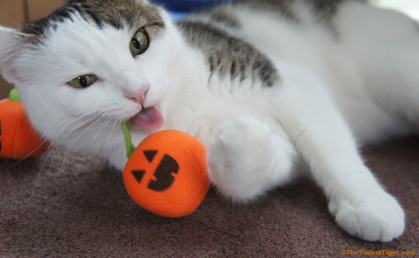 No Tricks All Treats For Cats This Halloween