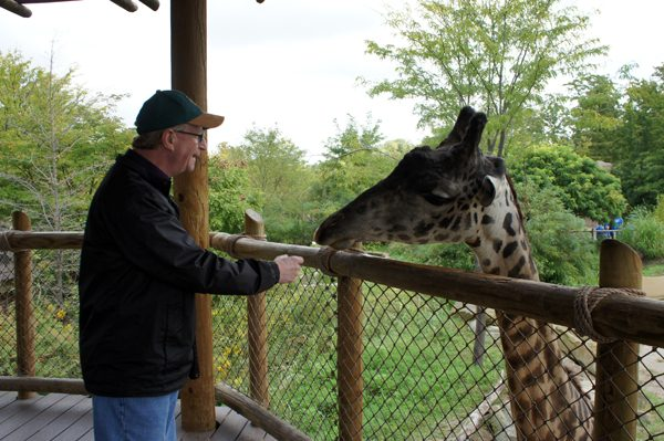 Paul feeding giraffe