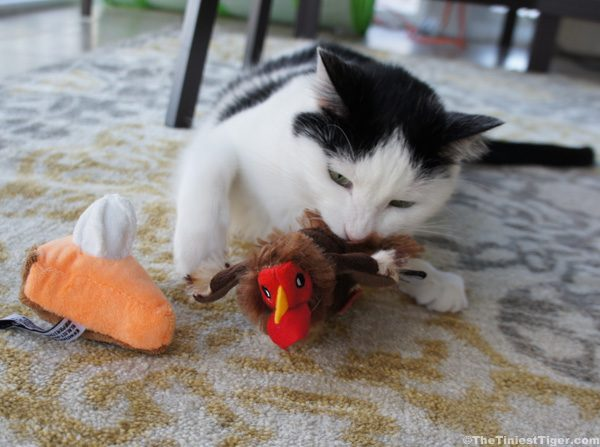 Cat With CatLadyBox Turkey and Pumpkin Pie toy