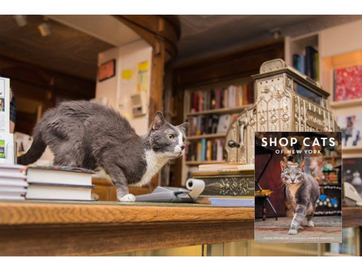 Shop Cats of New York  Review and Book Giveaway