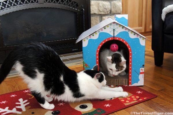 Annie teases Eddie in snow cabin