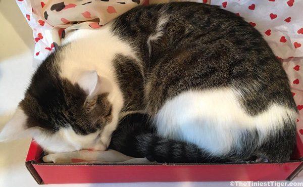 Annie in Valentine box