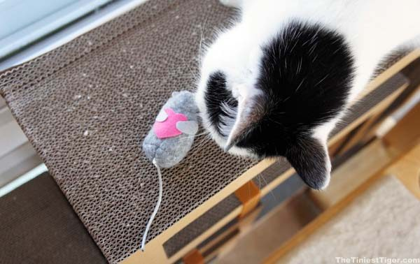 Eddie with Valentine mouse