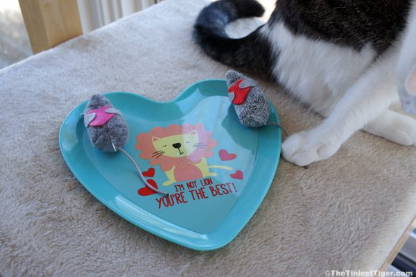 Annie chooses a mouse