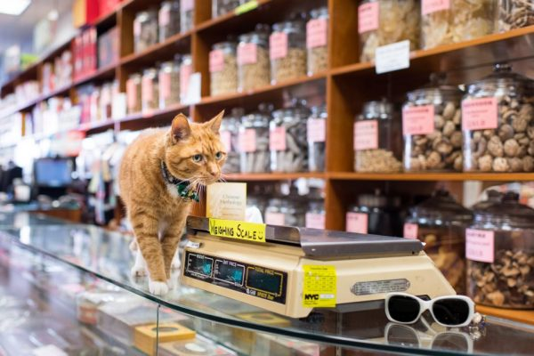 Shop Cats of NY Cat