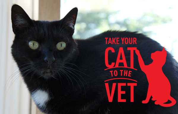 Take Your Cat To the Vet Day  Oh Mercy! #Cat2VetDay