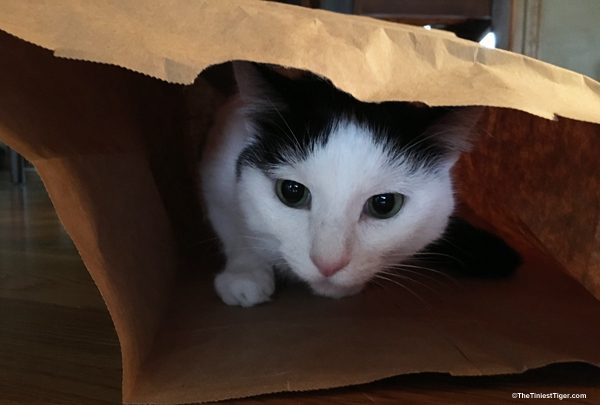 Eddie inside the bag