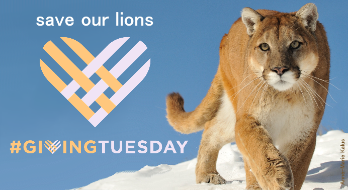 We Are Helping Save American Lions  #GivingTuesday