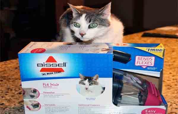 Gracey with Bissell Pet Hair Eraser Box