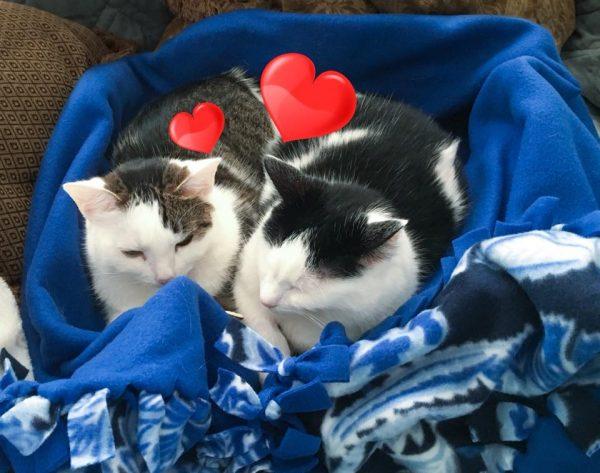 Annie and Eddie on blanket