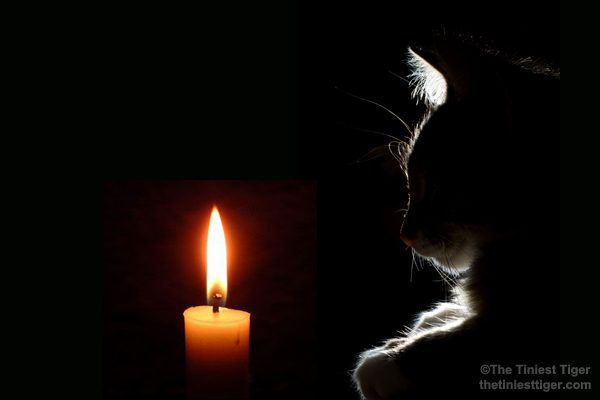 cat with candle