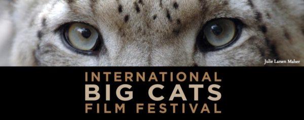 Big Cats Film Festival