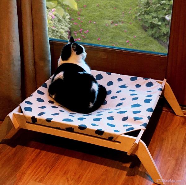 Eddie on Primetime Petz Pet Lounge