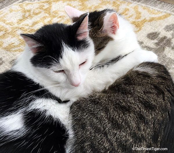 Annie and Eddie hugging