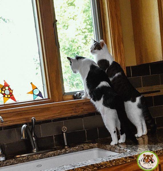 Annie and Eddie in the kitchen window
