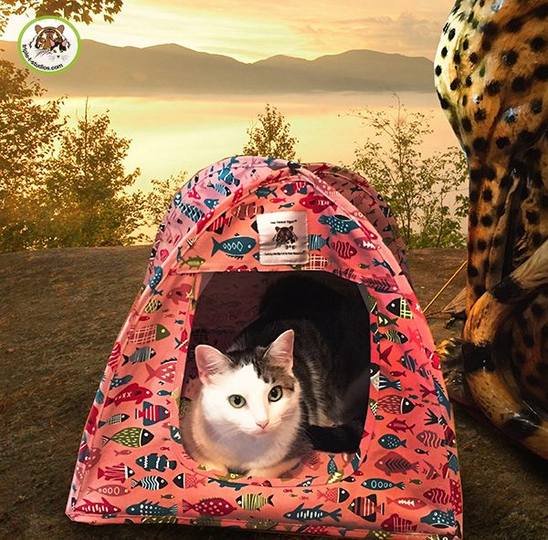 """Annie """"camping"""" in the Cat Tent"""