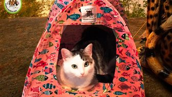 New Gone Fishin' Cat Tent Giveaway
