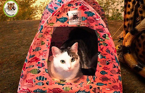 Annie in Cat Tent