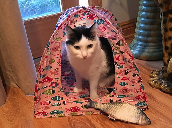 Eddie in Cat Tent