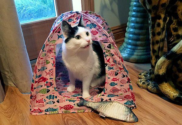 Eddie cat tent