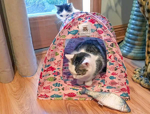 Eddie with Cat Tent and Cat Fish Toy