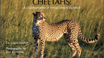 Cheetahs A Celebration of Speed and Elegance