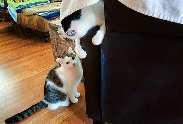 Annie gives Eddie the eye