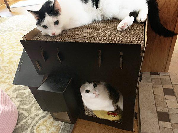 Annie and Eddie hide and seek
