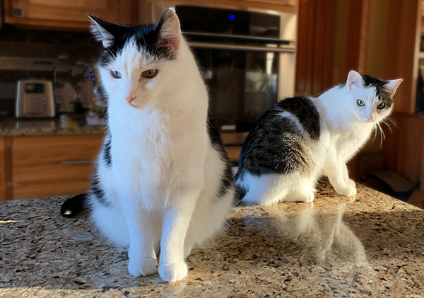 Cats Caught On the Counter