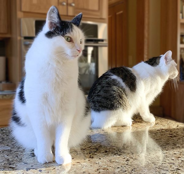 Eddie and Annie on the Counter