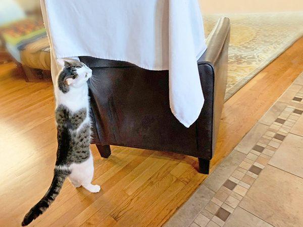 Annie finds Eddie under the blanket
