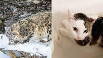 Annie and Snow Leopard