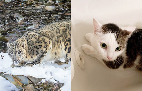 Annie and a Snow Leopard